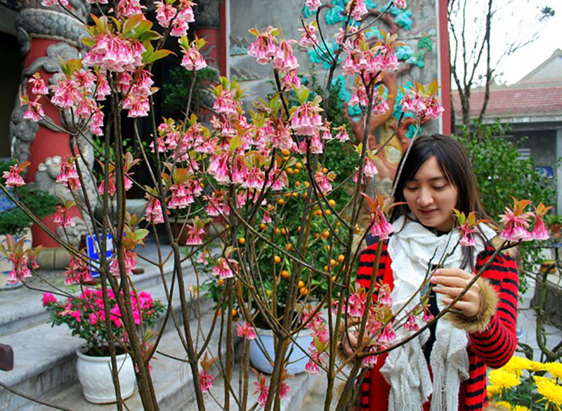 hoa-dao-chuong-4